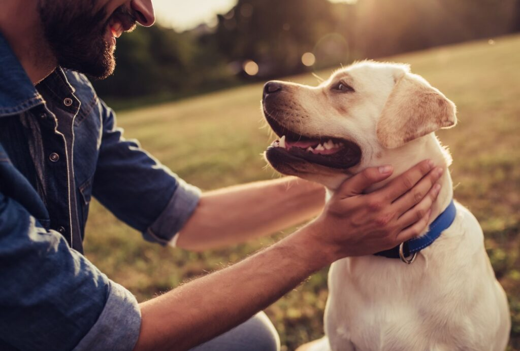 Show your dog lots of love when he acts like you want him to