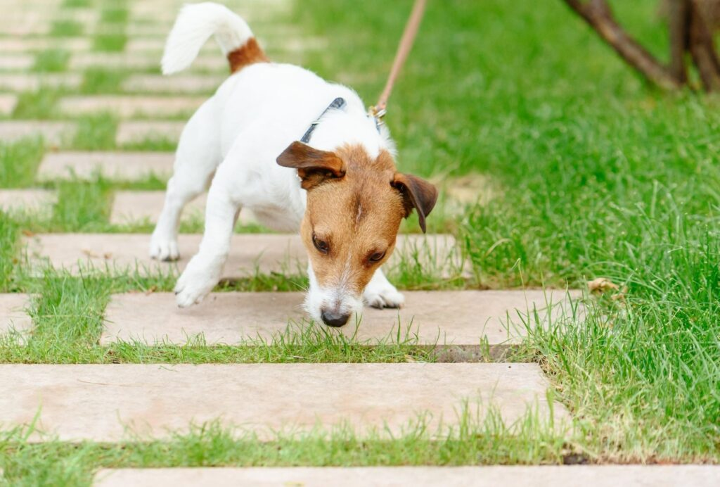 If your dog is pulling on the leash, the reward would be walking. You'll only give him that if the leash remains loose