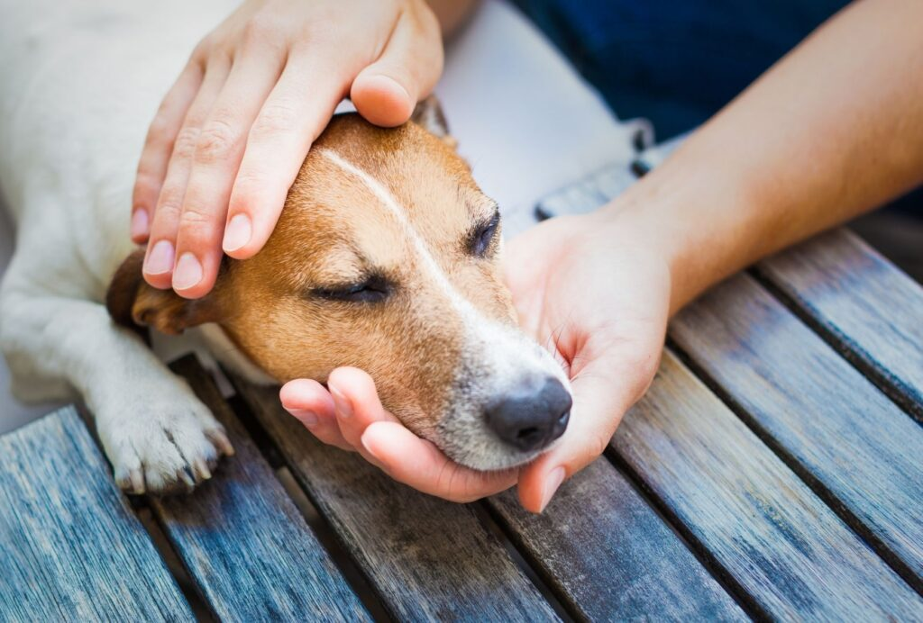Medical issues might be another reason why your dog is suddenly becoming clingy