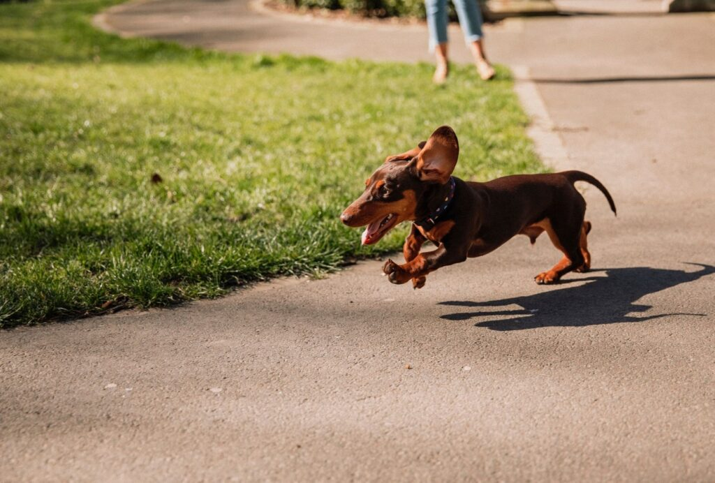 Going for walks can also be extremely exciting for dogs
