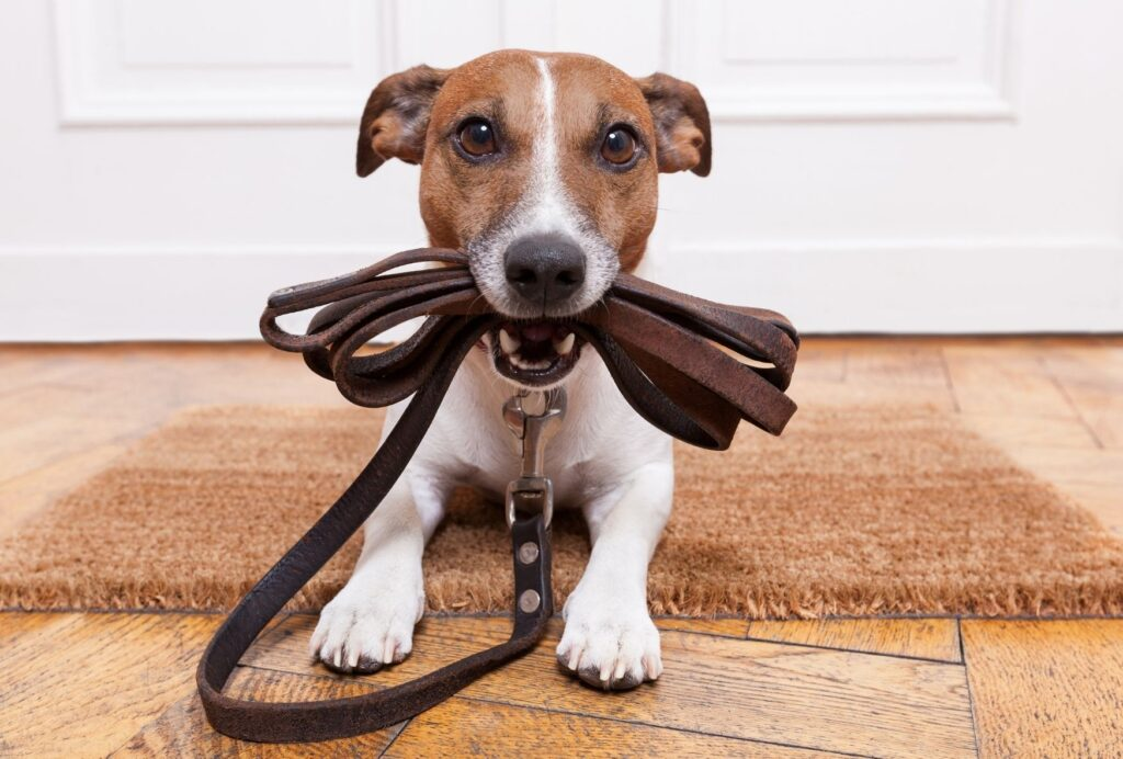 Tethering your dog somewhere safe for the first few minutes allows him to calm down before he's allowed to great your guests