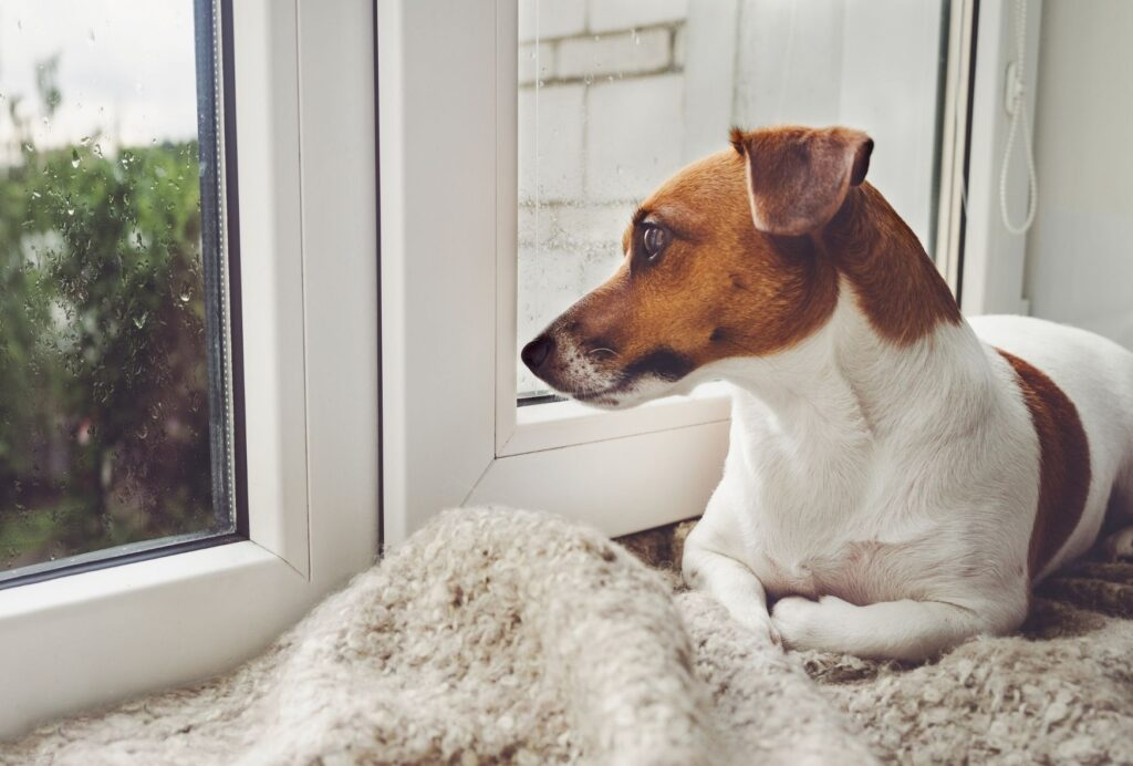 If your puppy always starts crying when you leave the room, he likely suffers from separation anxiety