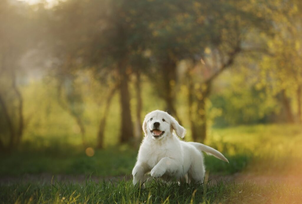 how much exercise should a puppy get