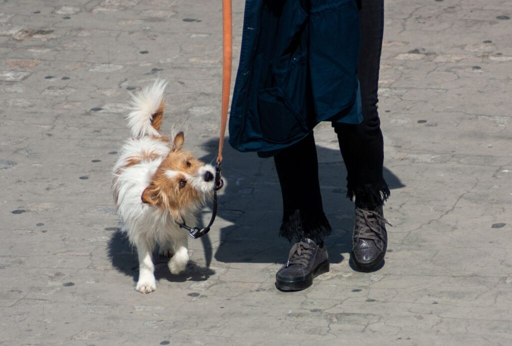 how to stop a dog from biting the leash