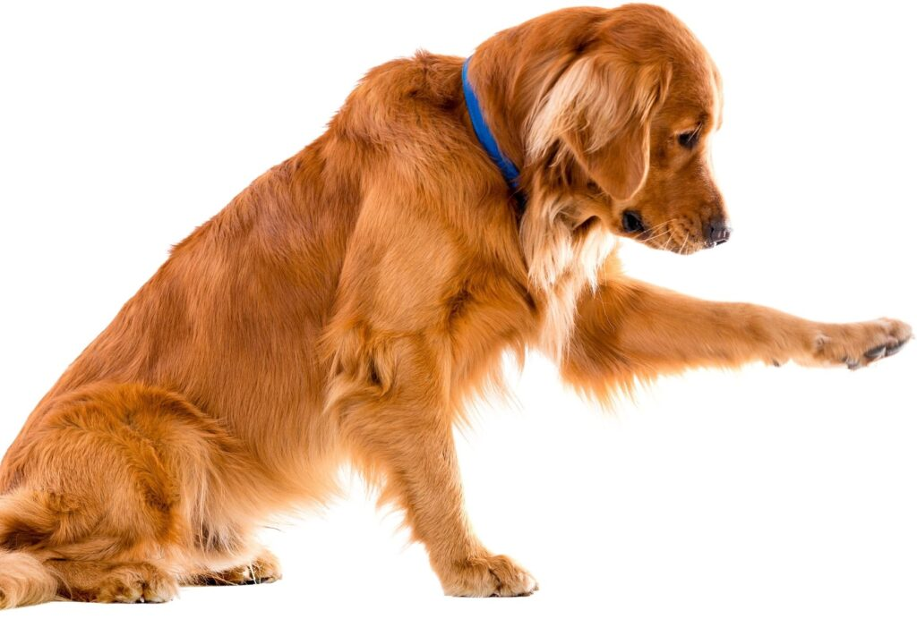 how to get a dog to stop pawing
